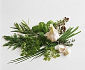 Still life with various culinary herbs and garlic