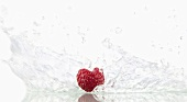 Raspberry with splashing water