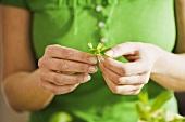 Woman holding a parsley leaf
