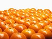 Viele Mandarinen in Reihen