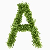 The letter A in cress