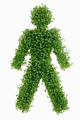 Figure symbolising man (in cress)