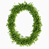 The letter O in cress