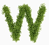 The letter W in cress