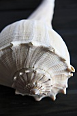 A snail shell (close up)