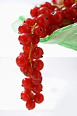 Red currants hanging from a fruit bowl