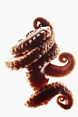 Octopus Tentacles on White Background