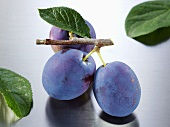 Plums (variety: Hanita) with twig and leaf