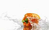 Orange pepper with splashing water