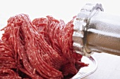 Minced meat emerging from mincer