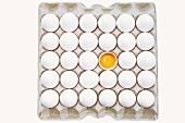 weiße Eier im Eierkarton, eines aufgeschlagen (Draufsicht)