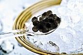Caviar on spoon, close-up