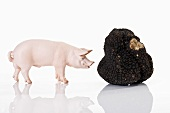 Pig figurine and black truffle