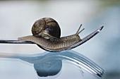 Snail on a fork