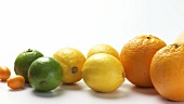 Grapefruits, oranges, lemons, limes and kumquats