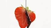 Erdbeerehälfte mit Schokoladensauce begiessen