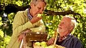 Älteres Paar bei der Apfelernte