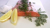Graved Lachs mit Dill bestreuen (Close Up)