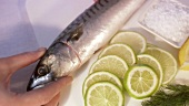 Mackerel with slices of lime and salt