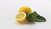 Lemons, lime and lemon leaves