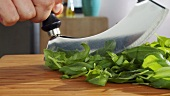 Chopping basil leaves with a mezzaluna