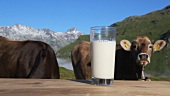 A glass of milk and cows, mountains in background