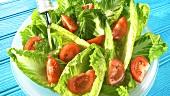 Romana-Tomaten-Salat mit Dressing anmachen