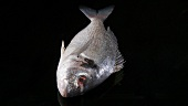 A sea bream