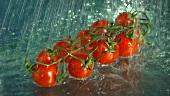 Tomaten waschen