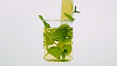 Putting a piece of lemon into a glass of mint tea