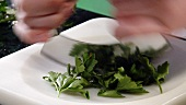 Chopping flat leaf parsley