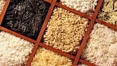 Various types of rice in a sprouting box