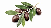 Olive sprig with black olives