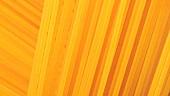Spaghetti (Bildfüllend)