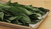 Fresh ramson leaves on a tray