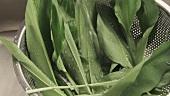 Bärlauchblätter unter fliessendem Wasser waschen