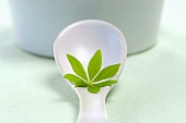 Woodruff leaf on a spoon