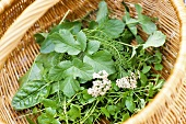 Herbs in basket, close-up