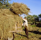 Farmer making hay
