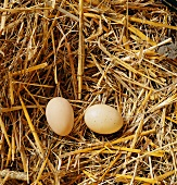 Two hen's eggs in a straw nest