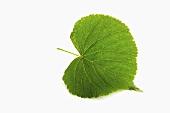 A lime leaf