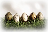 Five quails' eggs in a row