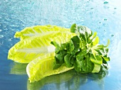 Corn salad and romaine lettuce with water