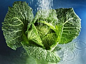 Savoy cabbage with water
