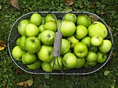 Green apples in basket on grass (overhead view)