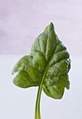 Ein Spinatblatt