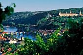 View of vineyards in Wurzburg, Franconia, Germany