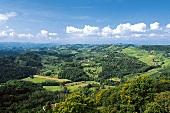 Slowenisch-Österreichische , Weinlandschaft