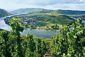 Traben-Trarbach, Mosel, Weinberge, Weinhänge, Weinanbaugebiet