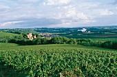 Chateau Langoiran. Weinlandschaft Premiers Cotes de Bordeaux.